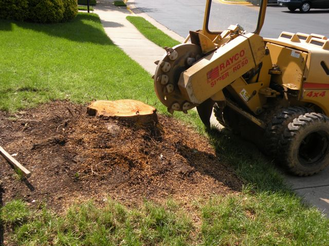 The Importance Of Stump Grinding
