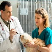Importance of Annual Visits to Your Veterinarian