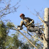 Why You Need a Tree Service St. Paul MN Location Professional