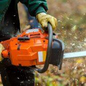 Finding a Tree Stump Grinding Expert