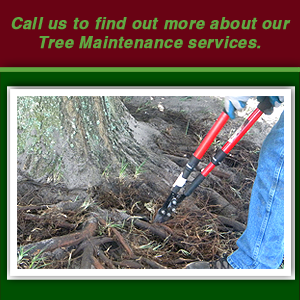 Tree Care in Bartow