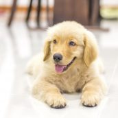 How To Find A Pet Clinic In Alexandria, VA