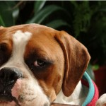 Pet Insurance Can Ease the Cost of an Animal Hospital Visit