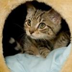 rabies_indoorcat