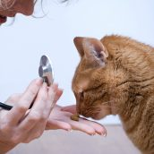 Animal Doctor in Oahu: How to Prepare Your Pets for Spring