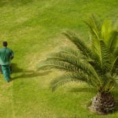 Rely on a Tree Removal Company to Clear a Large Lot