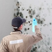 Mold Remediation in Wichita-A Task Which Cannot Be Put Off