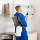 What To Expect From Keizer OR Pest Control Services