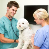 Where To Take Your Pet for Animal Health Care In Alexandria