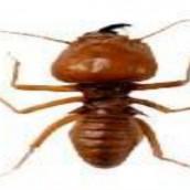 Hiring the Right Termite Exterminator Saugus MA