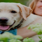 What to Look for When Visiting a Veterinarian Lenexa KS for the First Time