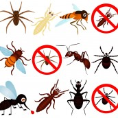 Seek Out Termite Control Options Before Problems Arise
