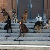 Dog Bootcamp For Comprehensive Dog Training in Chicago