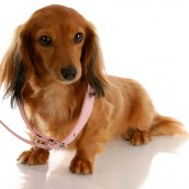 Tips for Choosing Pet Collars in Albany, OR