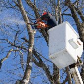 The Benefits Of Tree Pruning In Queens County, NY