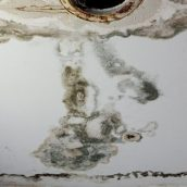 Frequently Asked Questions About Mold Damage in Colorado Springs