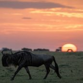 The Wonders of Wildlife Safaris in Tanzania