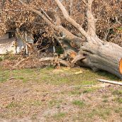 Benefits of Tree Removal Services