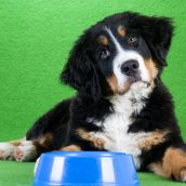 Advantages of Dog Boarding in Chicago at a Facility Providing Training Sessions