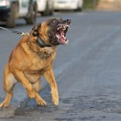 Starting a Claim for a Dog Attack with an Attorney in Albuquerque, NM