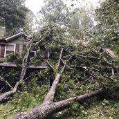 How a Professional Tree Service Can Be Valuable for a Homeowner