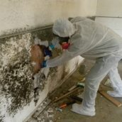 Common Causes of Home Mold Problems