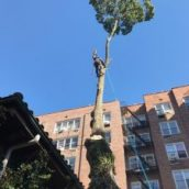Why It Is Best to Hire Professionals for a Tree Removal in Queens County, NY