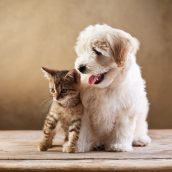 Your Furry Family Member Needs Pet Preventive Care in Alexandria
