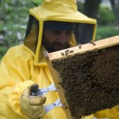 Frequently Asked Questions About Bee Infestations and Bee Removal In Brooklyn
