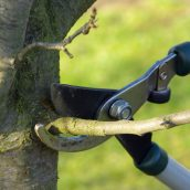 Caring for Your Property With Help From a Tree Service in Fairfield, Connecticut