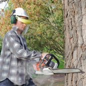 Oak Wilt: One Potential Reason for Tree Removal in Arlington