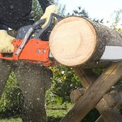 What Should You Know About a Tree Trimming Service in Kihei?