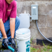 All about earwigs extermination Hilo services
