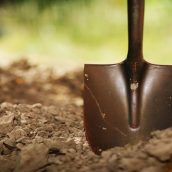 A Basic Guide for Stump Grinding in Anaheim