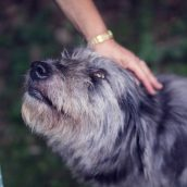 Obtaining The Best Dog Walking Services In NYC