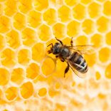 Why You Should Hire Bee Removal Experts In Case Of Bee Infestation