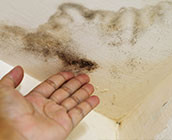 Mold Inspection: Promoting better health at home