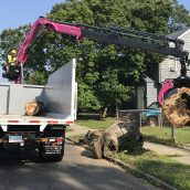 Potential Hazards an Arborist in Fairfield, Connecticut Considers When Tackling Projects