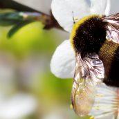 Call the Professionals for Bumble Bee Control in Pittsburgh PA
