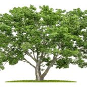 Protect Your Yard and Trees from Diseases and Mosquitoes with this Approach