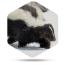 Skunk Removal in Reynoldsburg And Your New Home