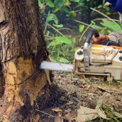 Methods of Stump Removal in Hattiesburg, MS