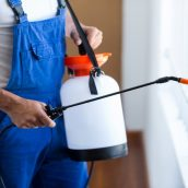 What Can Residential Pest Control in Providence, RI Do for Your Home?