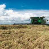 The Top Benefits You Can Reap From Crop Scouting in McGehee, AR