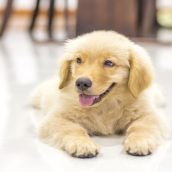 An Animal Hospital in Los Angeles Can Provide Lifetime Pet Care