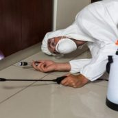 HOW TO MINIMIZE DAMAGE WITH PROPER TERMITE CONTROL OPTIONS